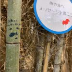 今年も魚のすみか「竹魚礁」を制作!!